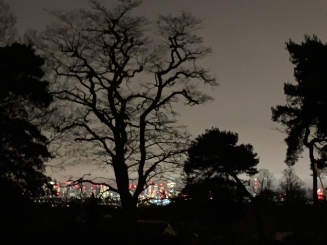 Trees and lights